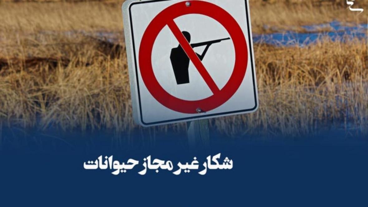 کشف 108 مورد تخلف صید و شکار فقط در 4 ماه در تهران
